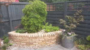 Japanese Maple trees make the perfect garden feature