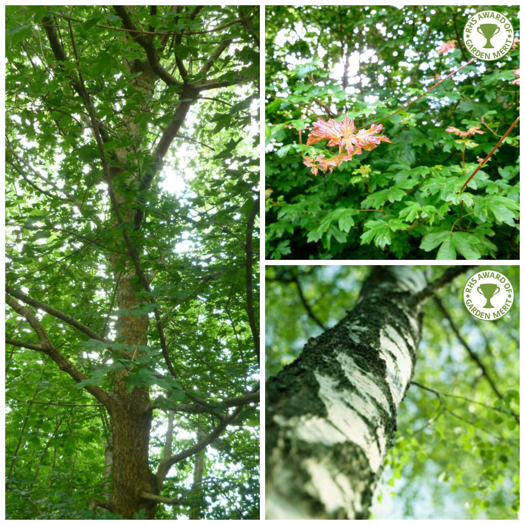 Native-Trees