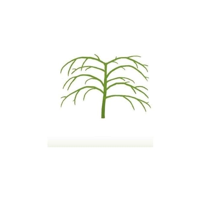acer palmatum dissectum viridis tree p350 4771 medium