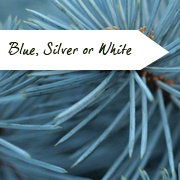 Trees With Blue, Silver or White Foliage