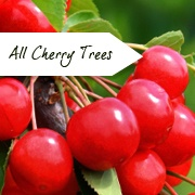 All Cherry Trees