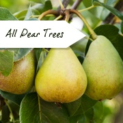 All Pear Trees