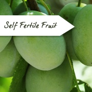 Self Fertile Fruit