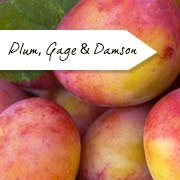 Plum, Gage & Damson Trees
