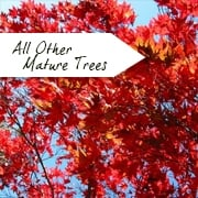 All Other Mature Trees