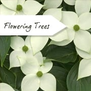 Flowering Trees for small gardens