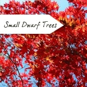 All Small/Dwarf Trees