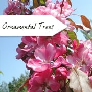 Special Offers on Ornamental Trees
