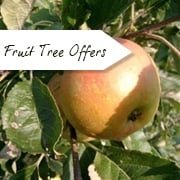 Special Offers on Fruit Trees