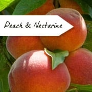 Peach & Nectarine Trees