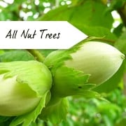 All Nut Trees