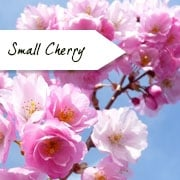 Small Flowering Cherry Trees