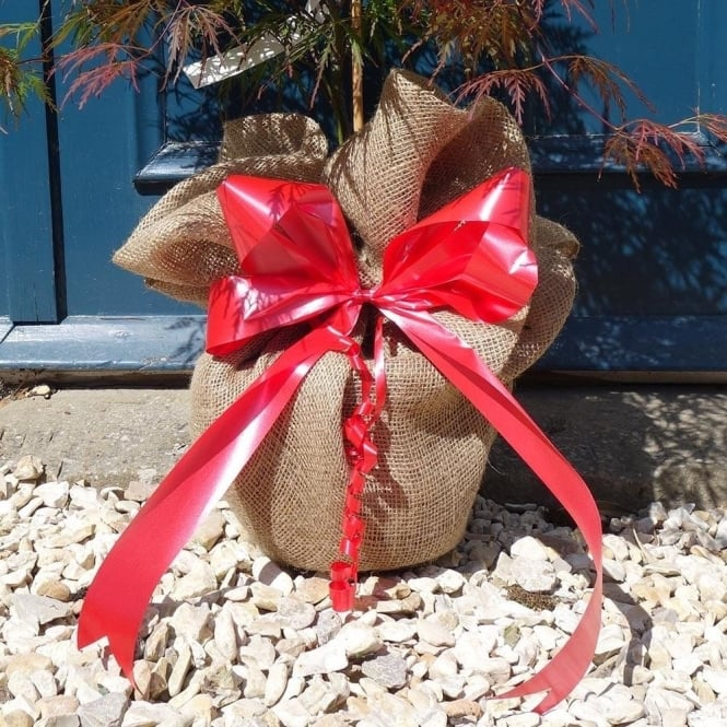 Gift trees gardening present ideas ornamental trees ltd gift wrap any tree make your own gift tree negle Image collections