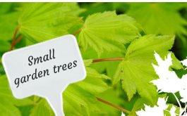 small garden trees 1