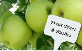 Fruit Trees & Bushes