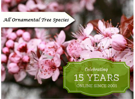 All Ornamental Tree Species