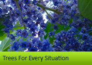 Ornamental Trees For Every Situation