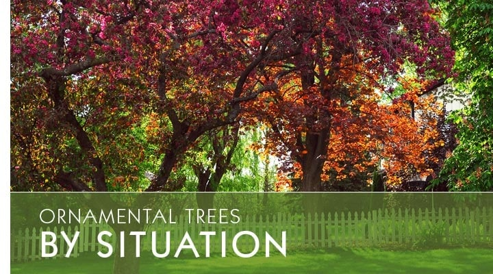 Ornamental Trees By Situation