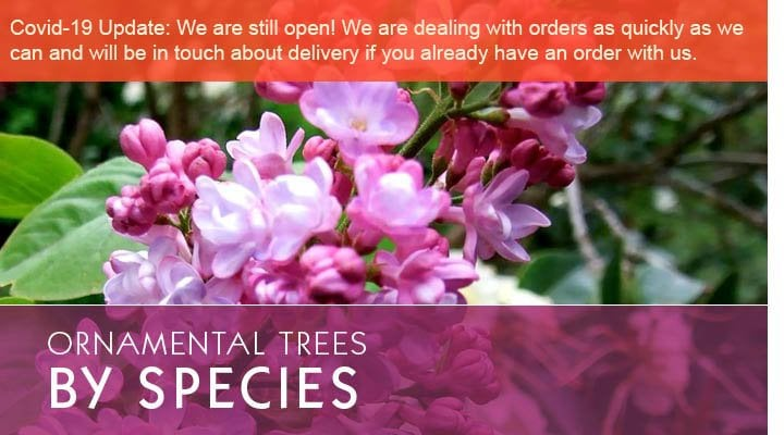 Ornamental Trees By Species With Message