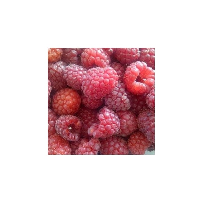 Raspberry Autumn Bliss