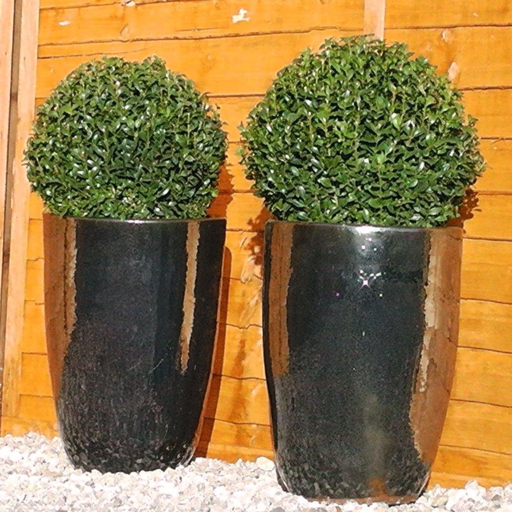 box topiary balls